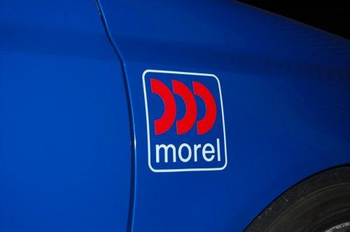 morel_1.jpg